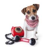 Телефон собаки центра телефонного обслуживания Стоковые Изображения RF