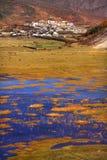 тибетец виска Стоковое фото RF