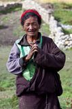 тибетец пастуха Стоковая Фотография RF