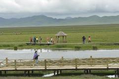 тибетец пейзажа плато злаковика Стоковые Изображения RF