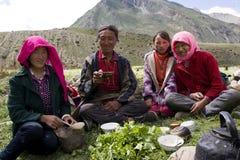 тибетец поля семьи одичалый стоковые фото