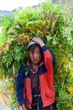 Тибетская девушка, Непал Стоковая Фотография