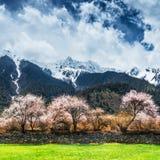 Тибетский ландшафт Стоковая Фотография RF