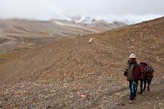 Тибетский номад с лошадью на пропуске Стоковые Изображения RF