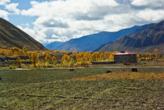 тибетское село Стоковая Фотография RF