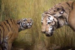 тигры стоковое изображение