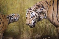 тигры стоковые изображения rf