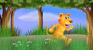 Тигр бежать в лесе Стоковое Изображение