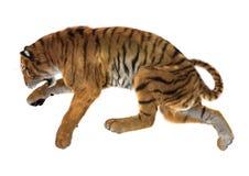 тигр большой кошки перевода 3D на белизне Стоковые Фотографии RF
