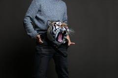 Тигр в брюках Стоковые Фотографии RF