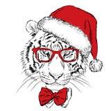 Тигр в шляпе и солнечных очках рождества Стоковая Фотография RF
