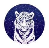 Тигр и звездное небо Иллюстрация графика olor ¡ Ð Стоковая Фотография