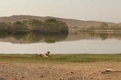 Тигр и озеро Стоковое Фото
