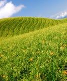 тигр лилии сада Стоковые Фотографии RF