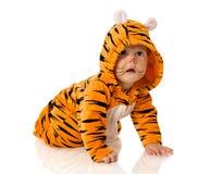 тигр младенца Стоковое Изображение