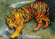Тигр наблюданный зеленым цветом Стоковая Фотография RF