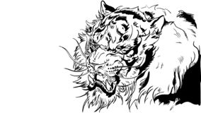 Тигр на белой предпосылке иллюстрация штока
