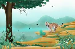 Тигр на скале Стоковая Фотография