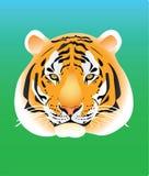 тигр портрета Стоковая Фотография