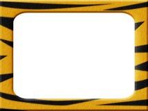тигр рамки Стоковая Фотография RF
