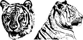 тигр руки чертежа Стоковая Фотография RF
