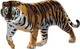 тигр сибиряка серии иллюстрация вектора