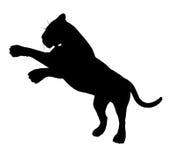 тигр силуэта dpi 300 pouncing Стоковая Фотография
