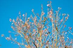 Тигр ферзя цветка Стоковое Фото