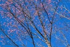 Тигр ферзя цветка Стоковые Фото
