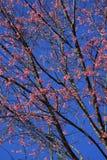 Тигр ферзя цветка Стоковые Изображения RF