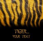 тигр шаблона кожи Стоковые Изображения RF