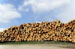 Тимберсы раздела сосенки все Стоковая Фотография