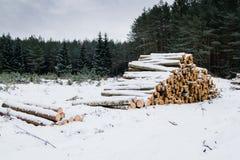 Тимберс вносит дальше лес в журнал в зиме Стоковые Фото