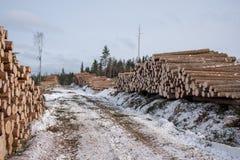 Тимберс в кучах около дороги в лесе в Швеции Стоковая Фотография RF