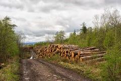 Тимберс жать в северо-западе Шотландии Стоковая Фотография RF