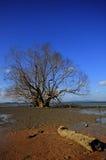 Тимберс на пляже Стоковое Фото