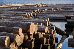 Тимберс плавая на реку Стоковые Фото