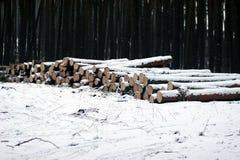 тимберс стога пущи снежный Стоковое фото RF