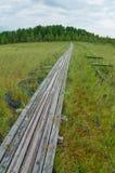 тимберс торфа путя зеленого цвета травы трясины Стоковое фото RF