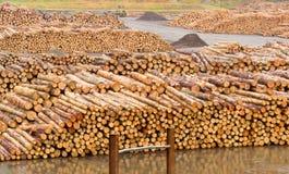 тимберс филированный пиломатериалом готовый stockpiled к Стоковая Фотография