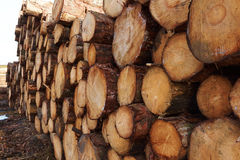 Тимберс штабелированный в лесе Стоковая Фотография