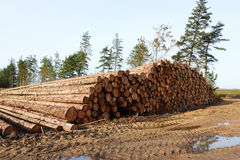 Тимберс штабелированный в лесе Стоковое Изображение RF