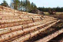 Тимберс штабелированный в лесе Стоковое Фото