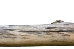 Тимберс для жить Стоковое Фото