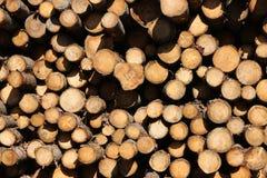 тимберс Стоковая Фотография RF