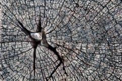 Тимберс Стоковые Изображения