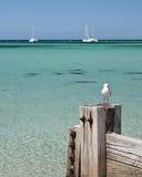 тимберс seagul groyne Стоковые Изображения