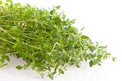 тимиан травы крупного плана свежий Стоковое фото RF