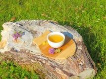 тимиан травяного чая Стоковая Фотография RF