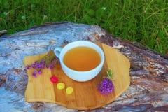 тимиан травяного чая Стоковое Изображение RF